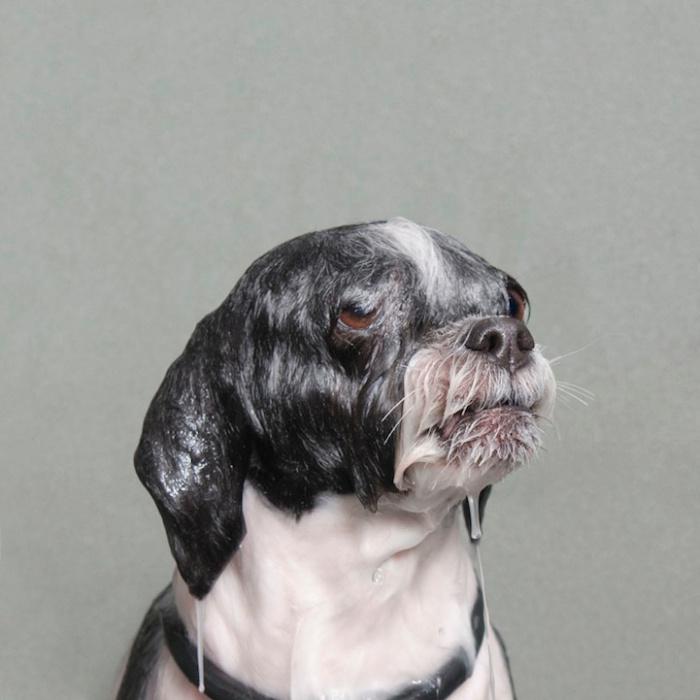 wetdog3