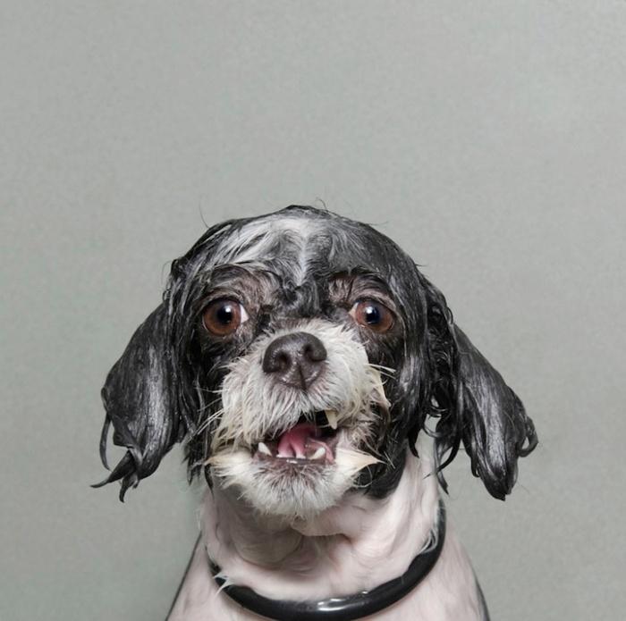 wetdog5