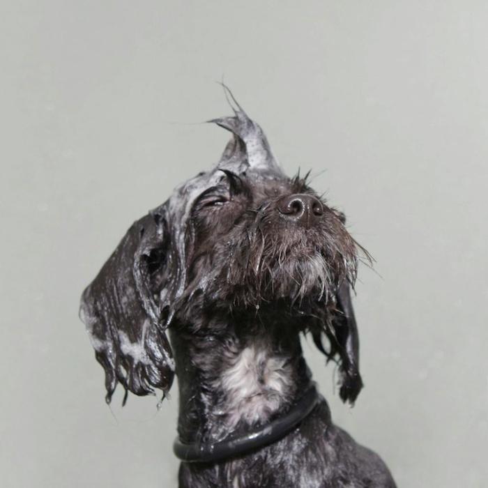wetdog7