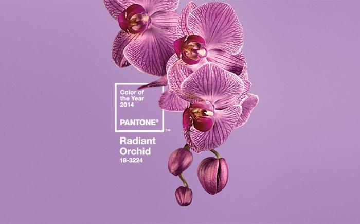 radiant orhid