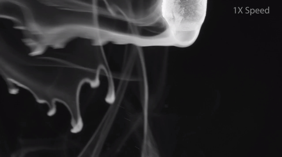 Beautiful Chemistry Smoke 3